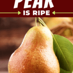 How To Tell If A Pear Is Ripe