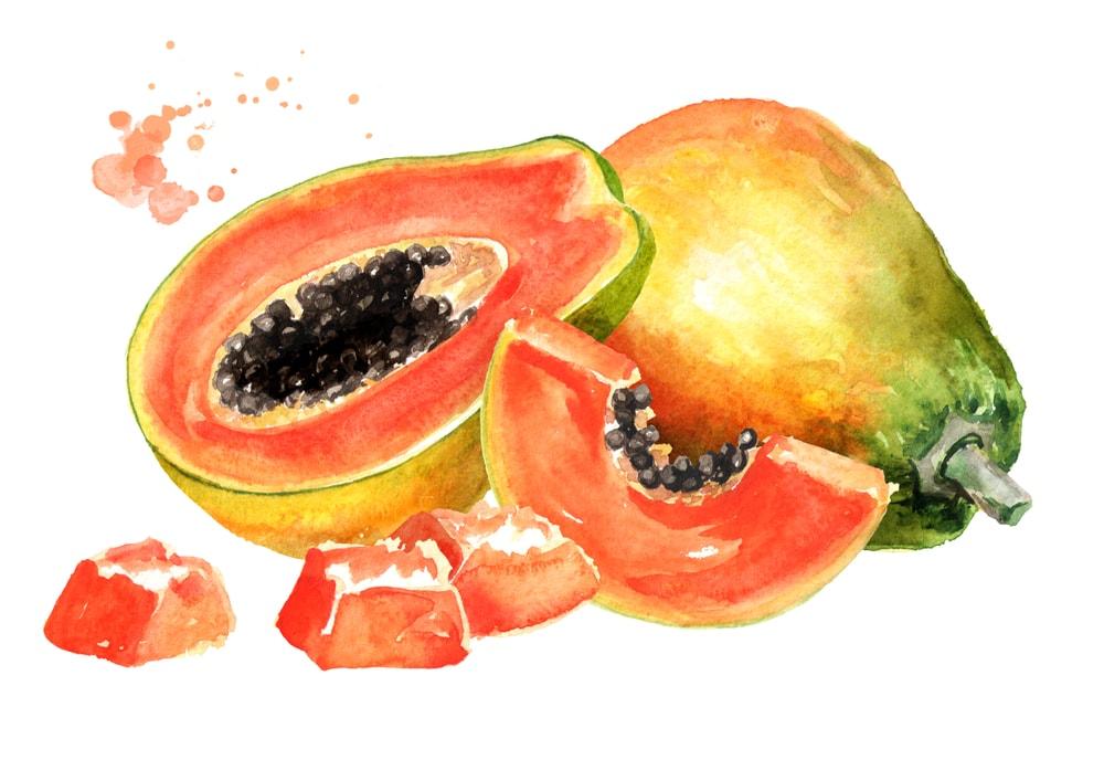 Papaya Illustration