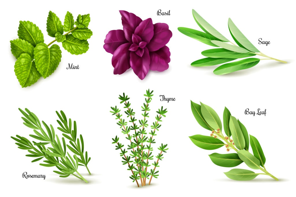 variety of herbs - thyme, basil, rosemary, and sage