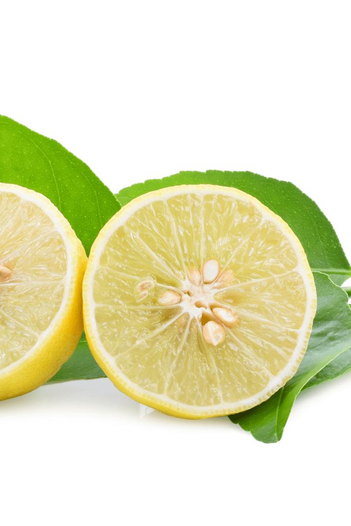 Desert Lime