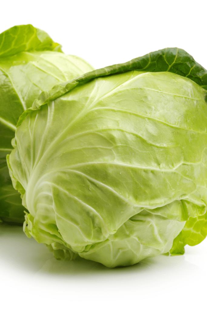 Green Head Cabbage