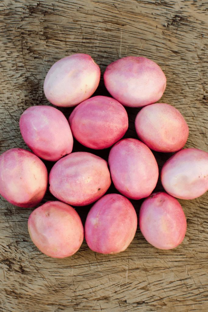 Icaco Fruit