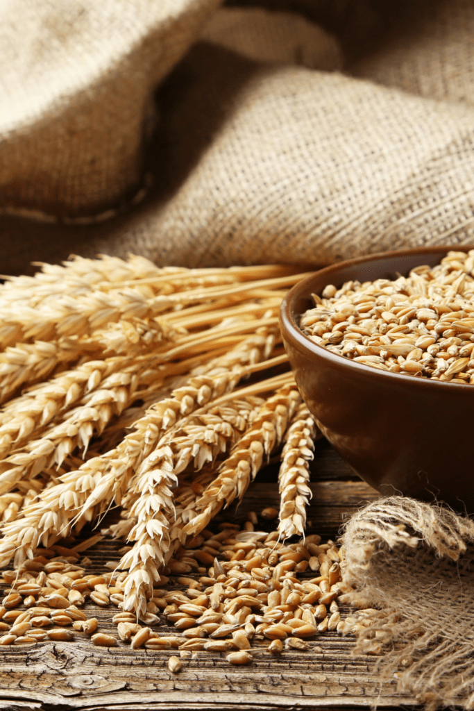 Wheat with Whole Grains of Wheat