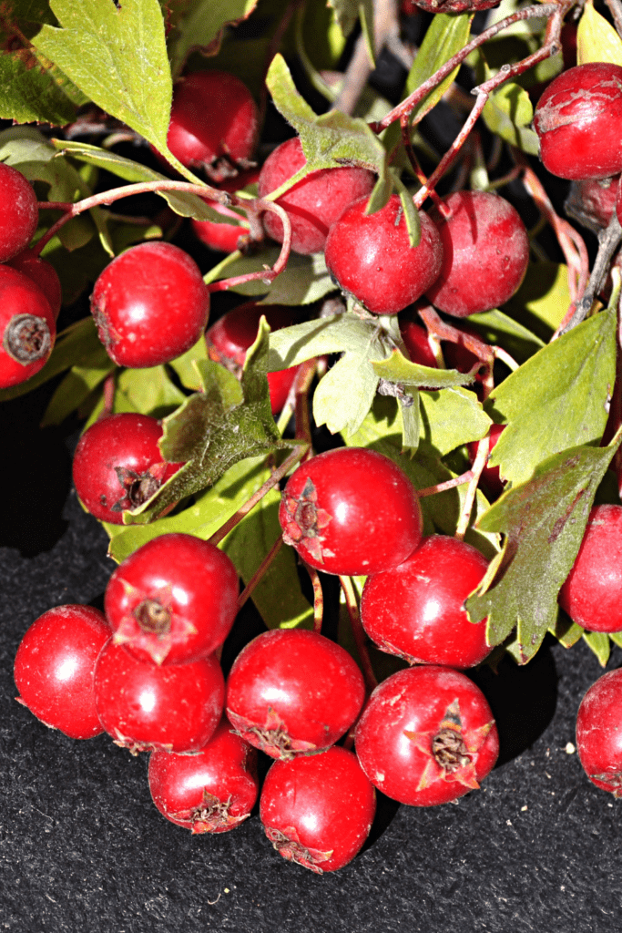 Yunnan Hackerberries