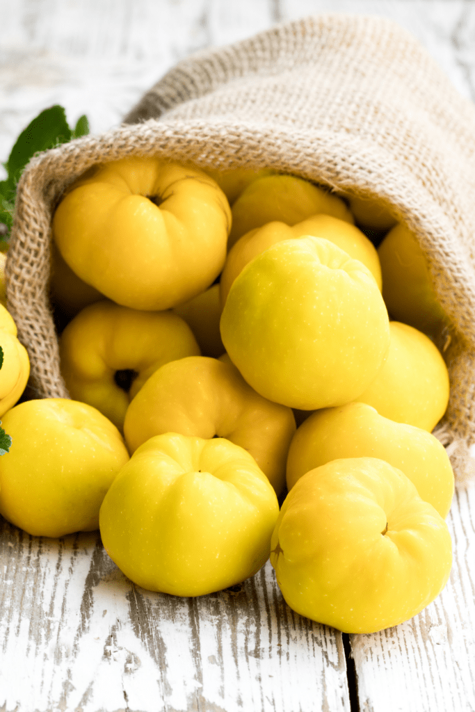 Yellow Quince Fruits