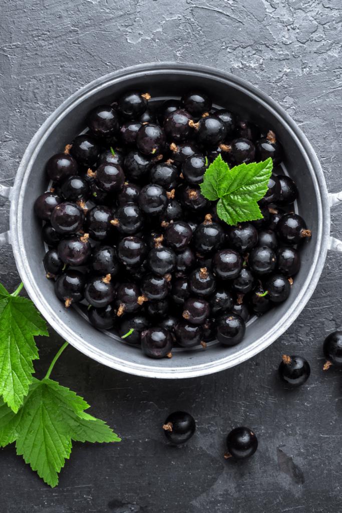 Grosella Negra or Black Currant